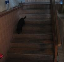 laiptu-pakopu-atnaujinimas-grindu-parketo-slifavimas-867134228-1